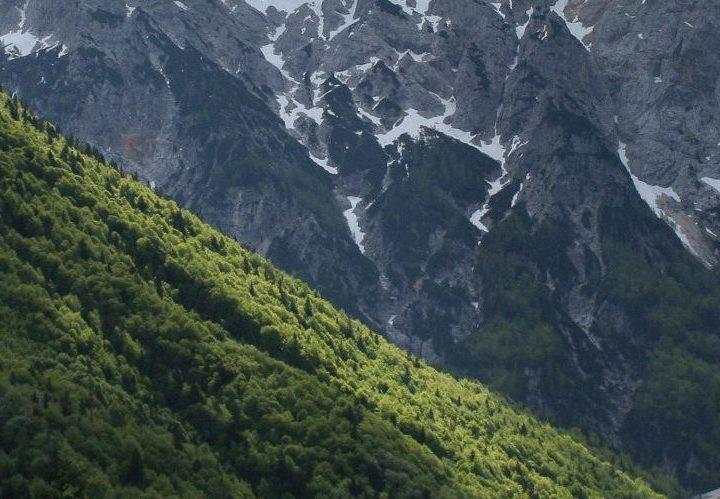 Forêt de Slovénie